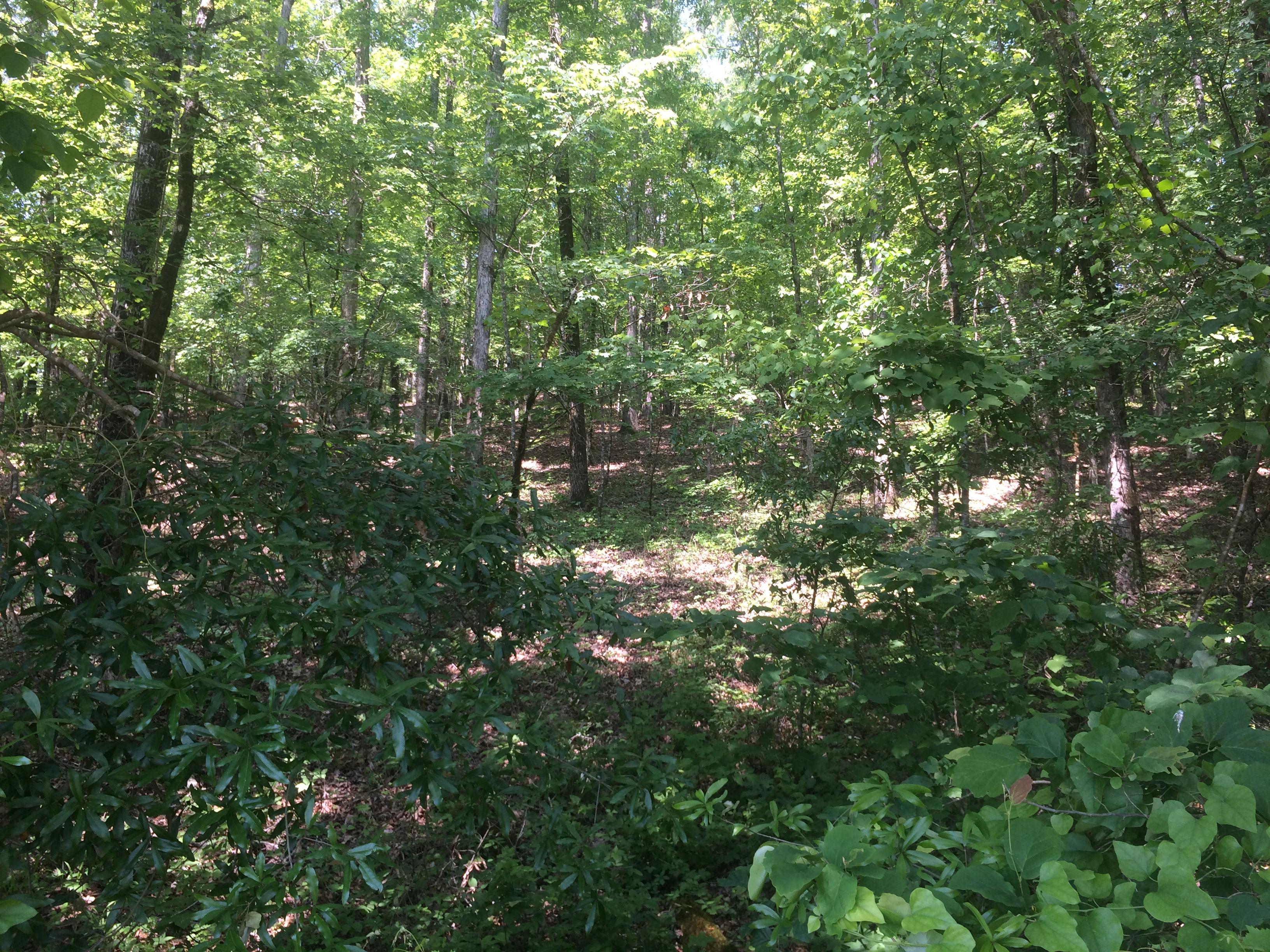Alabama tuscaloosa county duncanville - Duncanville Alabama Five Acre Wooded Homesite Hargrove Road